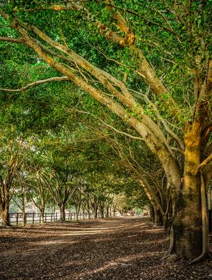 caminho sob as árvores