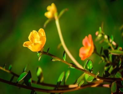 pequenas flores coloridas
