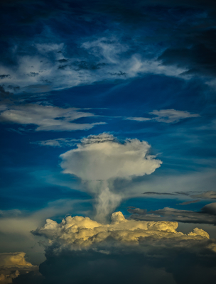 árvore celeste