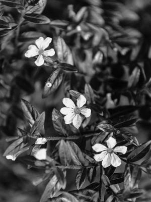 três flores_2