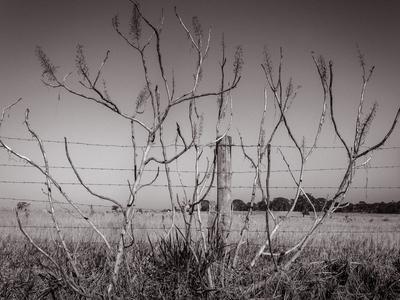 arbustos na cerca