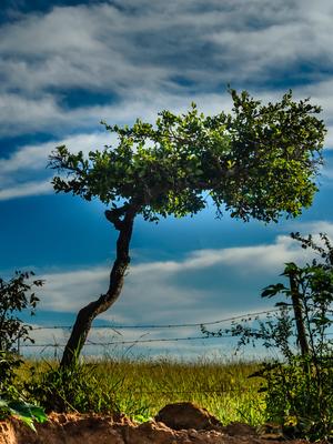 árvore inclinada_2