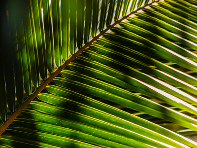 folhas diagonais_3