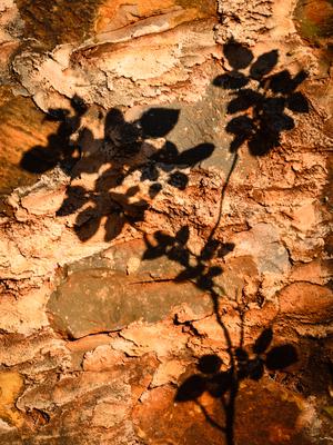 sombra na parede_2 em