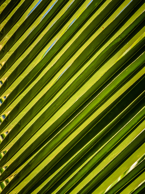 folhas diagonais_4