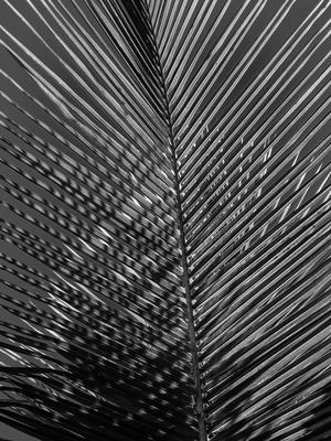 folhas diagonais_5