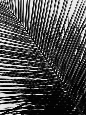 folhas diagonais_6
