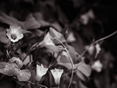 arranjo floral_em