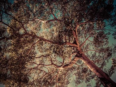 luz entre folhas