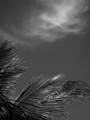 folhagem e nuvem