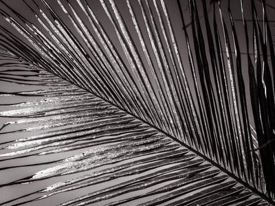 folhagem diagonal_3