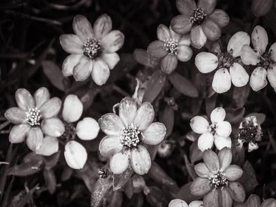 arranjo floral_2 em