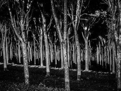 floresta negra_em