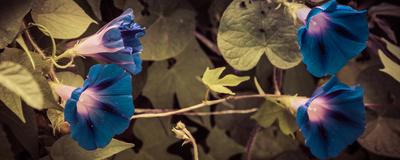 natureza em azul
