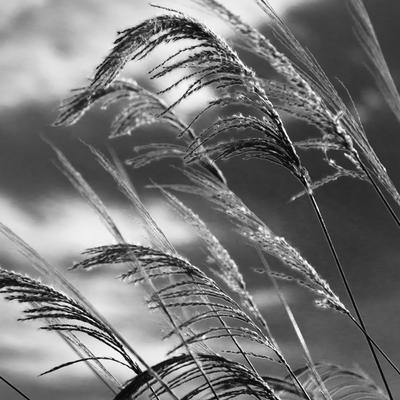 ramos ao vento
