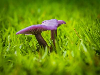 cogumelo selvagem_2