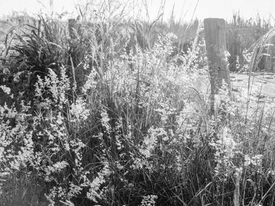 flores ao pé da cerca