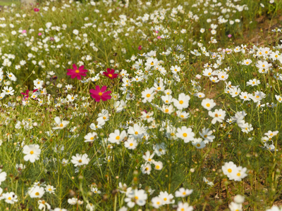 flores de primavera_2