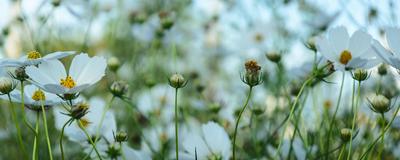 flores de primavera_3