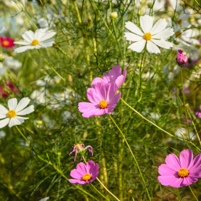 flores de primavera_4