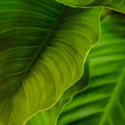 verdes folhas