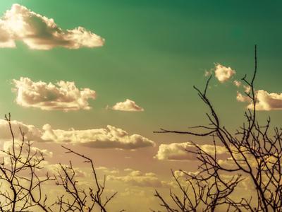 natureza surreal_3