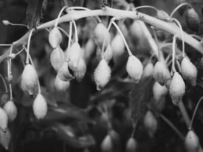 pequenas sementes