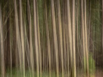 floresta de eucaliptos_5
