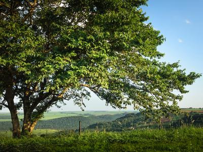a árvore e o vale