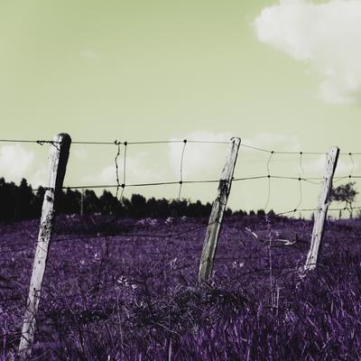 cerca de fazenda
