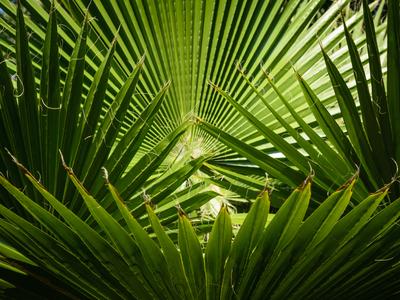 folhagem tropical_em