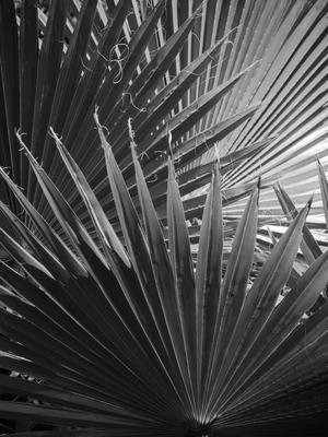folhagem tropical_3