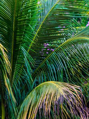 folhagem de coqueiro multicor