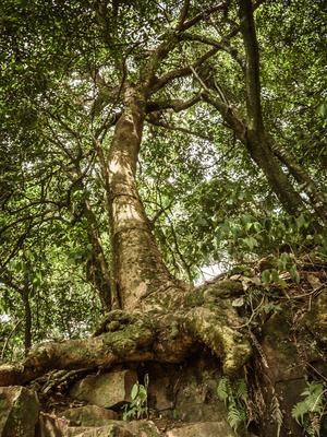 árvore sobre pedra