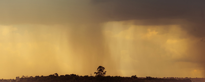 chuva dourada