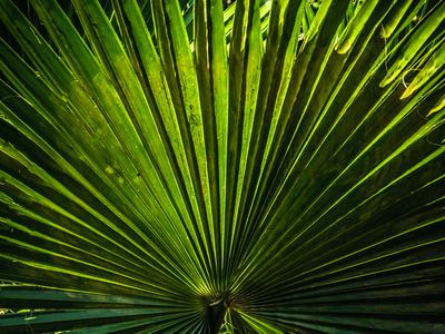 folhagem tropical_5