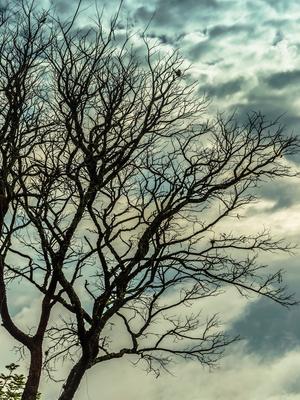 copa sob ceu nublado_2