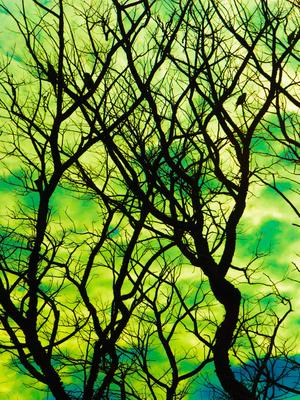 natureza surreal_5
