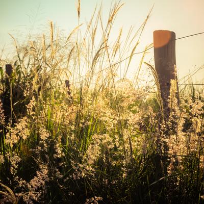 florada na cerca