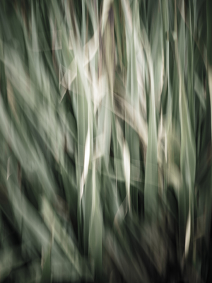 erva cidreira ao vento_2