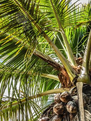 copa com cocos