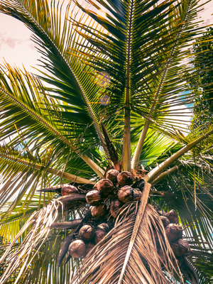 copa com cocos_2