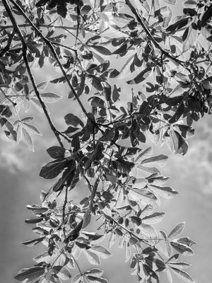 cortina de folhas_3