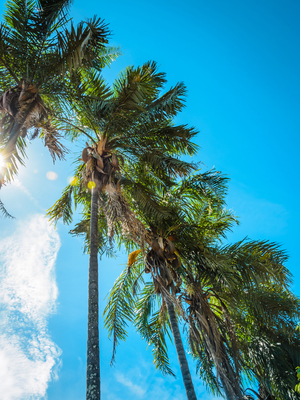 palmeiras em diagonal