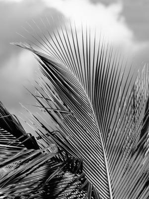 folhas de palmeira e nuvem