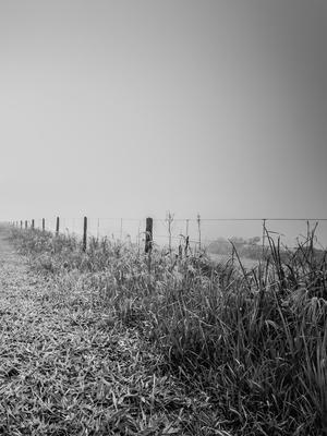 nevoa no campo