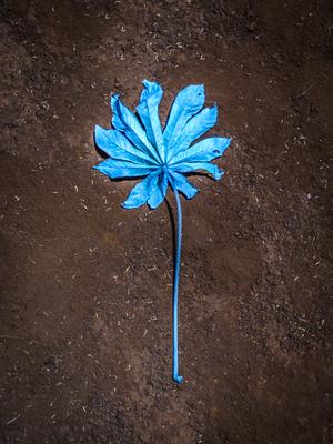 flor azul_em