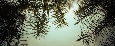 cortina de folhas_5