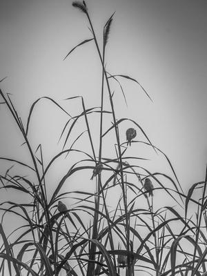 refugio ao amanhecer_2