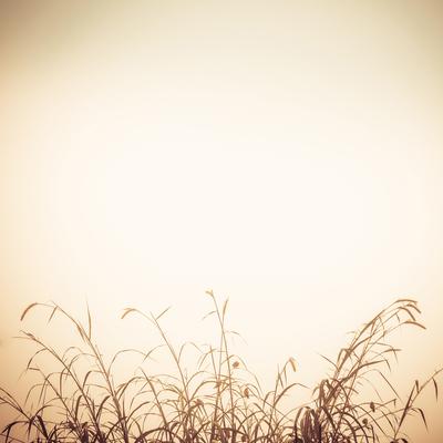 refugio ao amanhecer_3